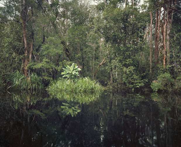 primary_swamp_forest_619